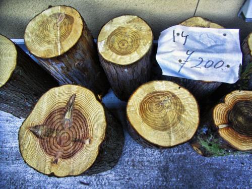 売れれている杉の木の丸太