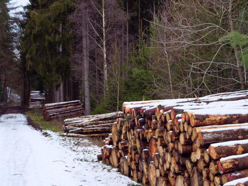 別荘敷地内で伐採した樹木