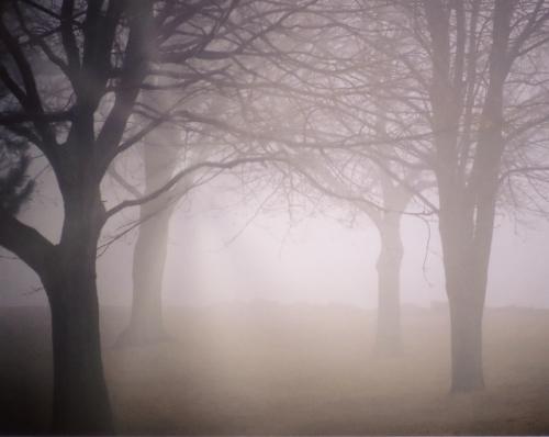 別荘地にかかる霧